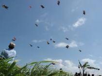 Kite Runner 9