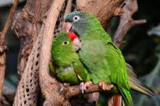 Lovebirds 3